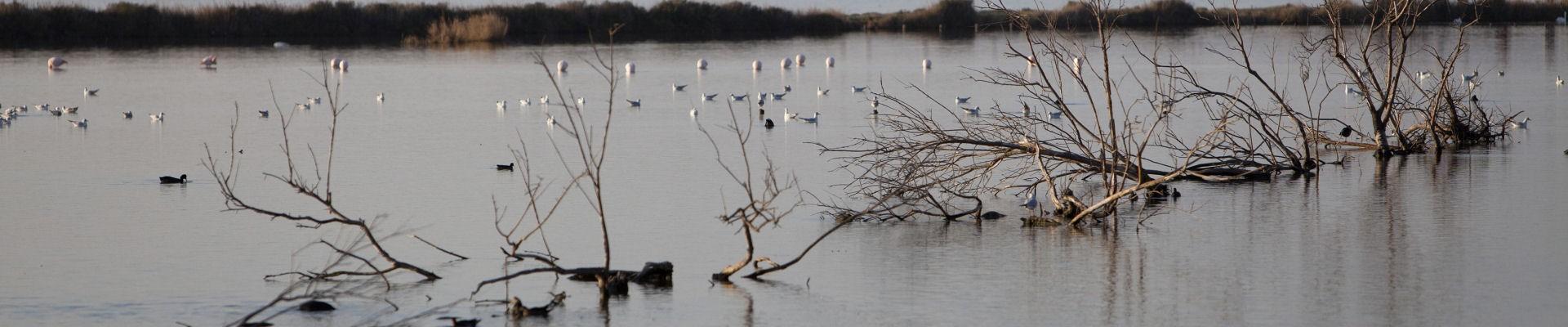 Etang de Berre - Oiseaux sur l'eau - Signe et Flamant Rose- Martigues
