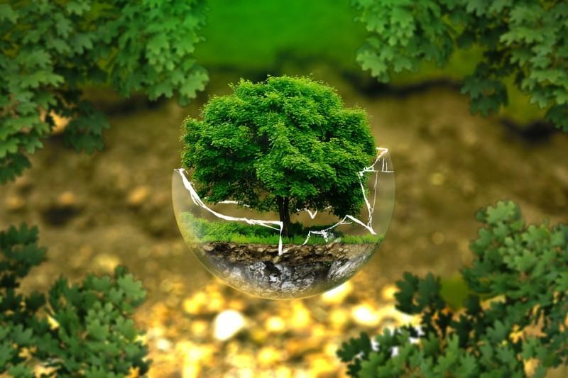 Umweltverantwortlich