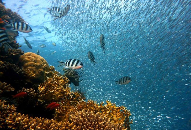 Pêche, Sports sous marins