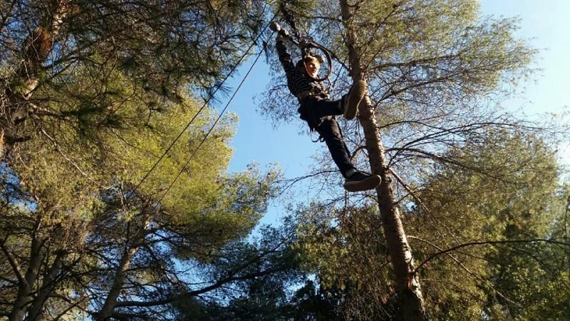 Baum, der indischen Wald klettert