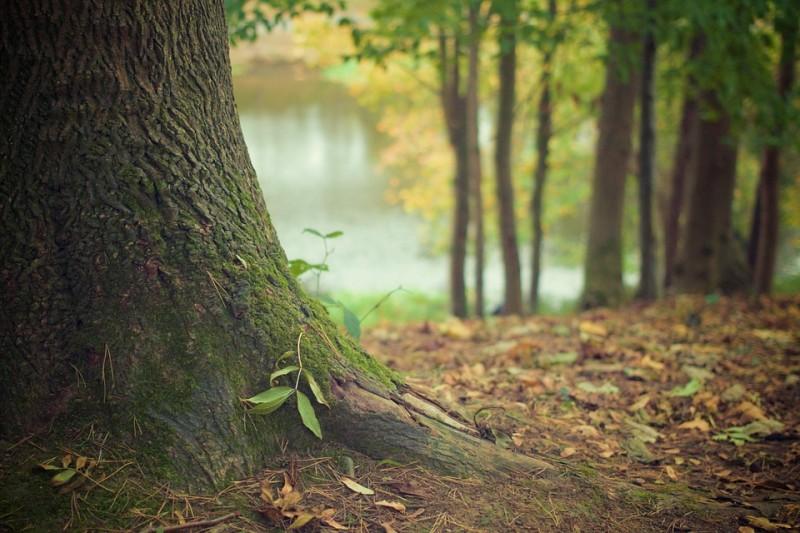 Zugang zum Wald