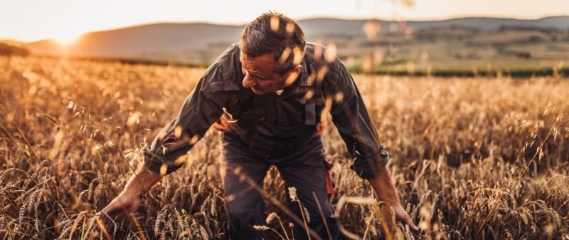 Agriculteur paysan