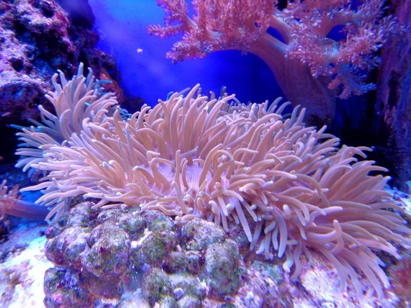 Corail fonds marins