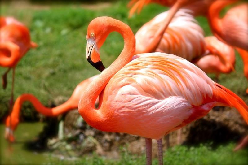 flamingo-635700-960-720-817