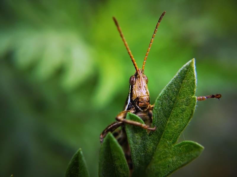 Les insectes référencés sur le littoral de la Côte Bleue