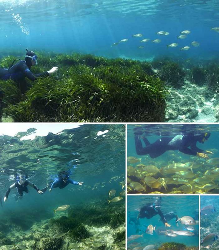 Parc marin de la Côte Bleue