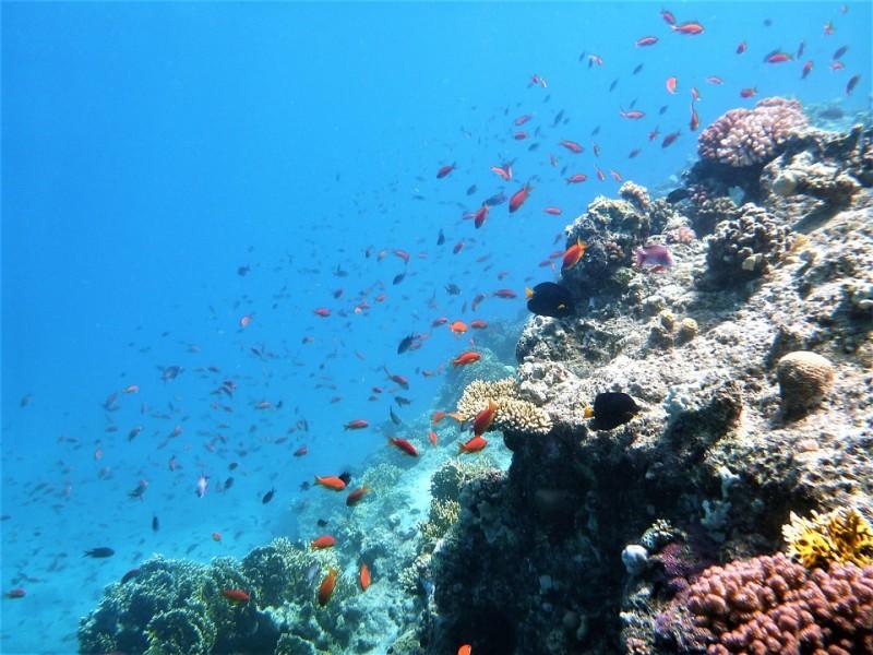 Poissons fonds marins Côte Bleue