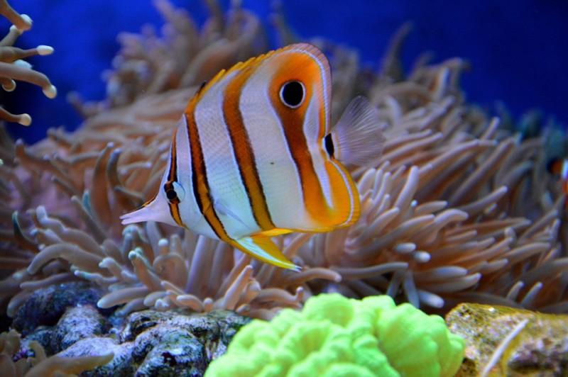reef-1100073-960-720-820