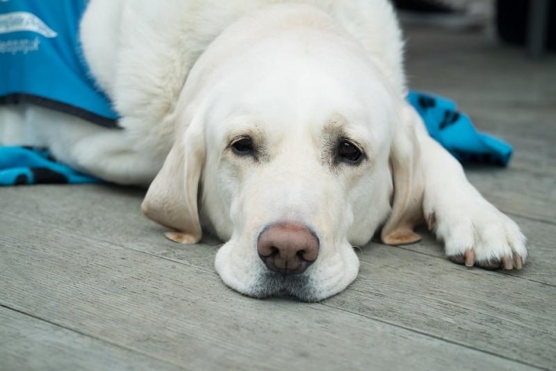 dog-3175810-960-720-117479