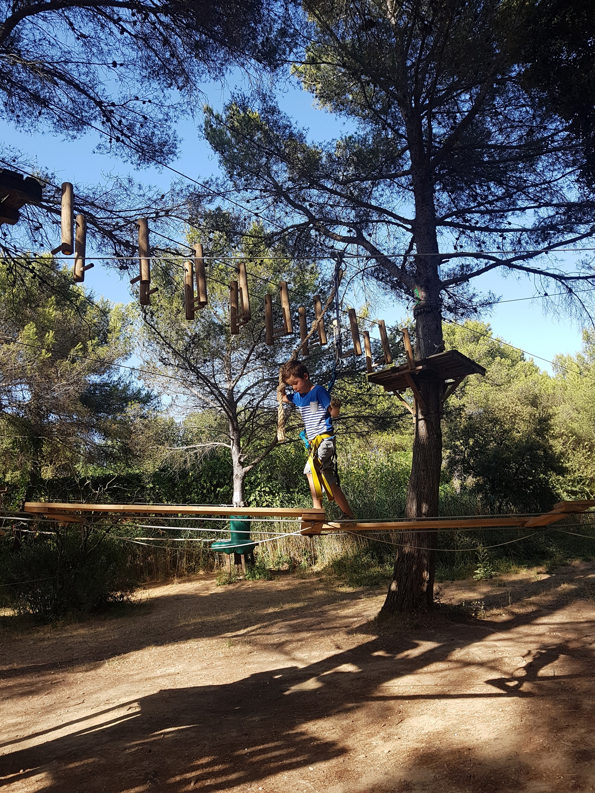 Tree climbing at the Grand Parc de Figuerolles