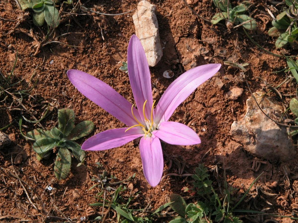 La boucle botanique de la plaine de Carro - © Otmartigues - Ville de Martigues