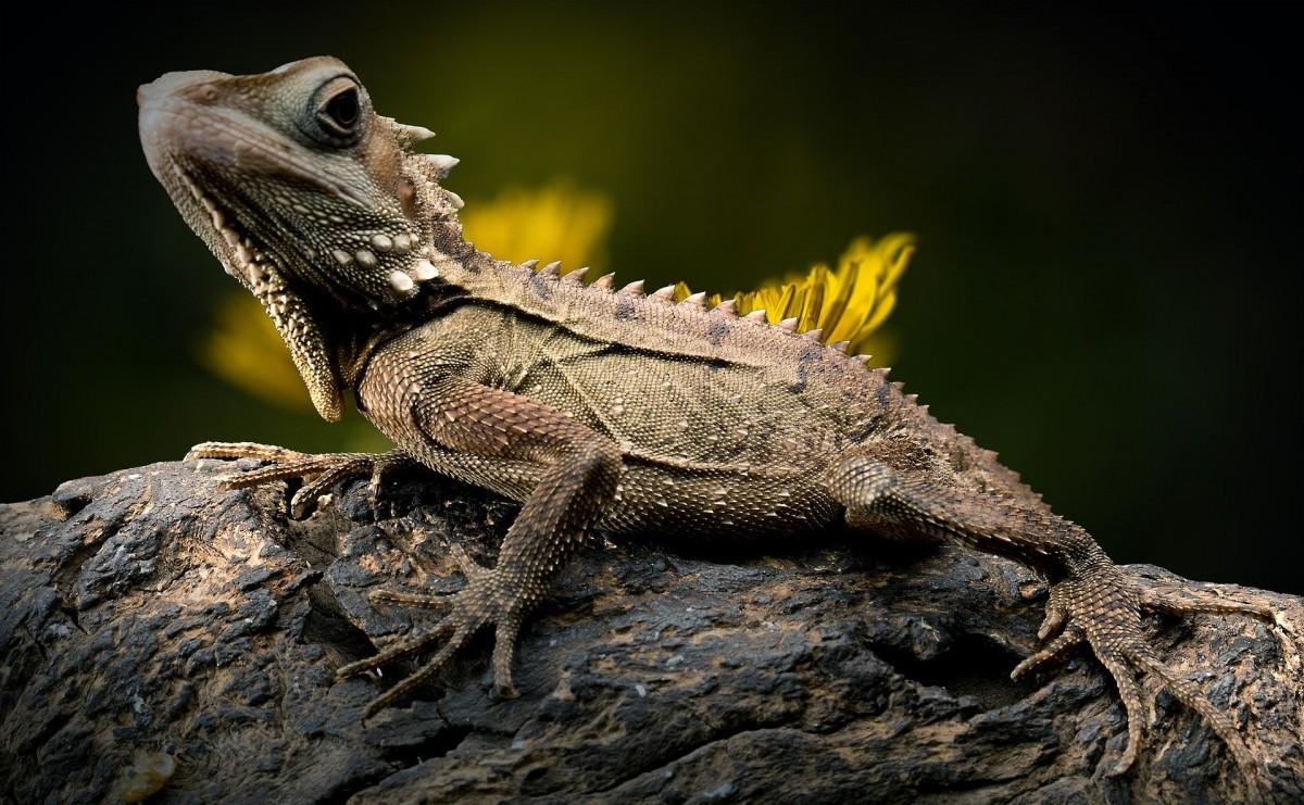 Reptiles on the Martigues coast